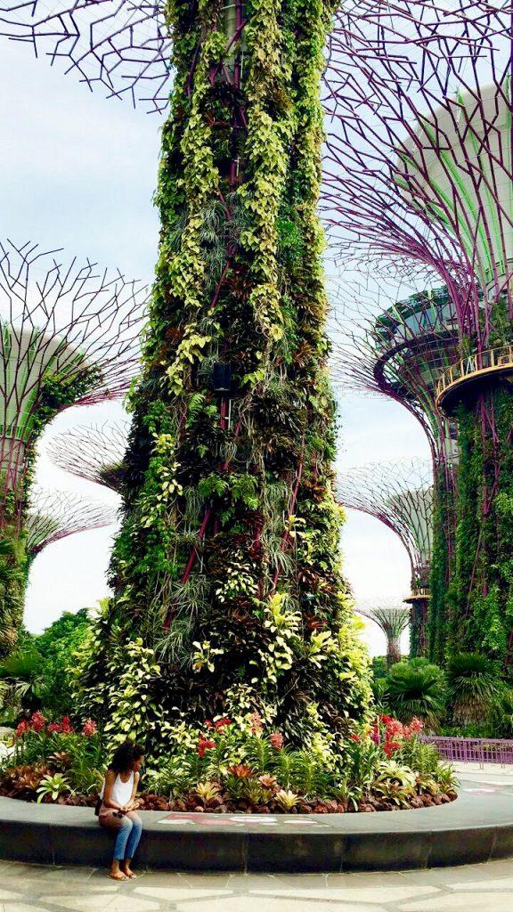 Super Tree Grove Singapore